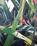 Flowering Flax